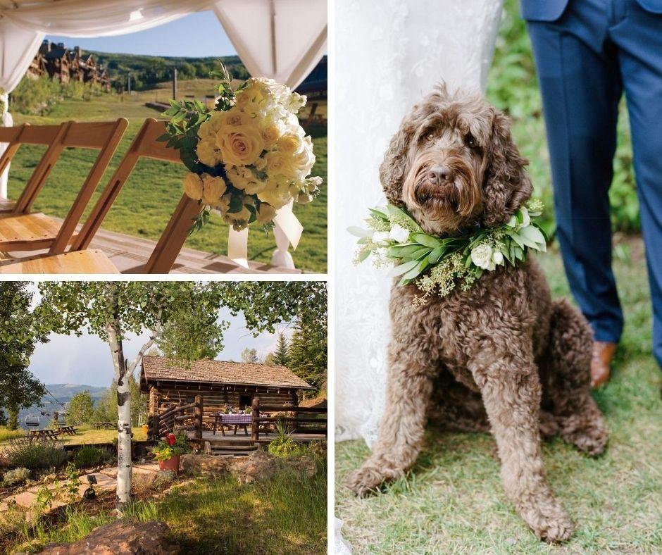 Pet Friendly Destination Wedding Resorts